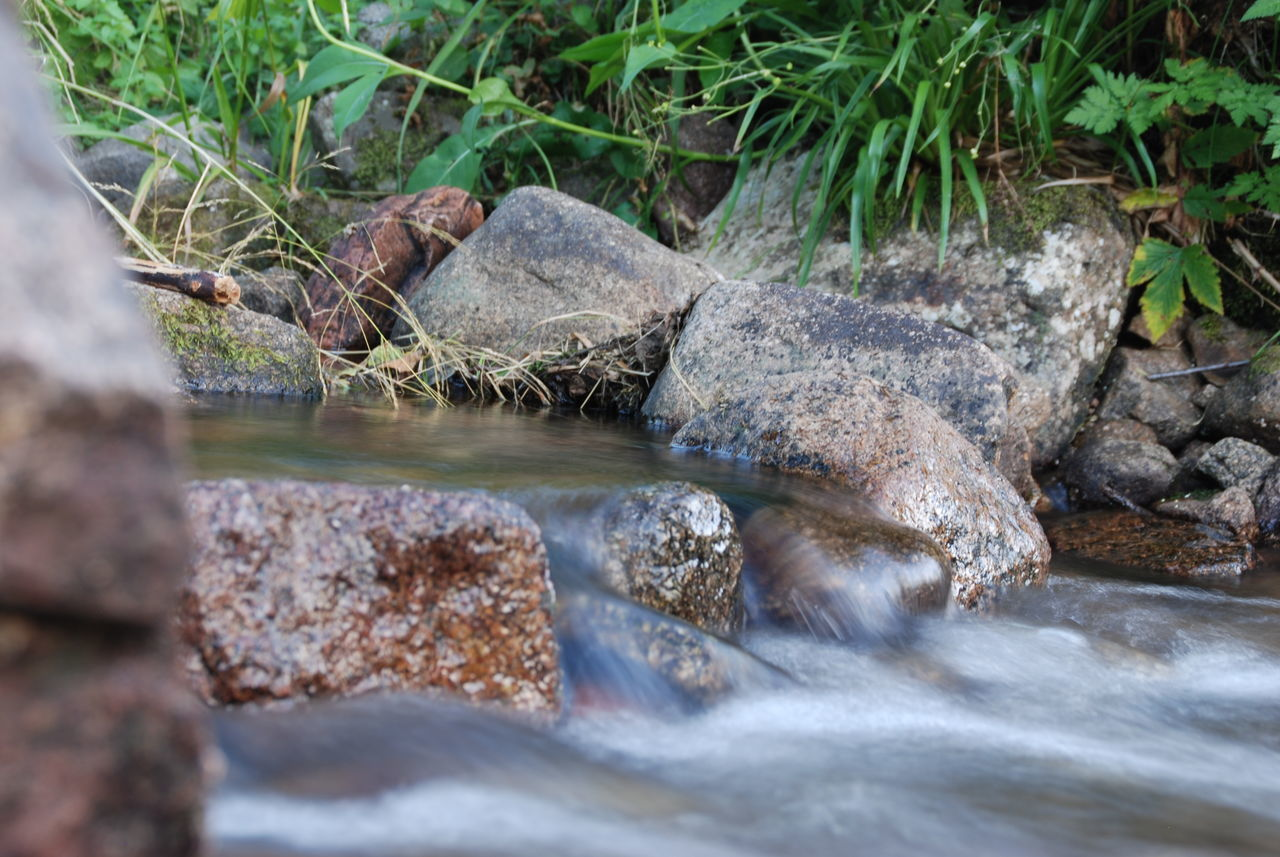 water, rock, solid, rock - object, nature, no people, day, animal, animal themes, motion, animals in the wild, river, animal wildlife, selective focus, land, one animal, outdoors, long exposure, flowing water, flowing, stream - flowing water, marine