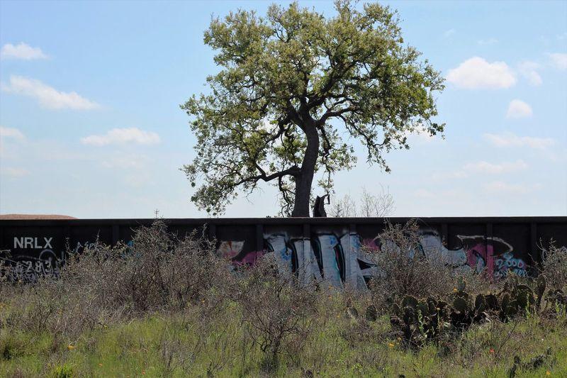 Beauty In Nature Graffiti Graffitiporn Grass No People Train Train Graffiti  Train Photography Train Track Train Tracks Trains