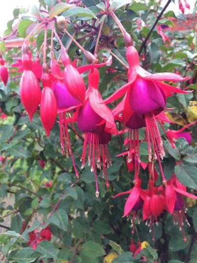 Flower fustian