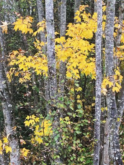 Growth Yellow