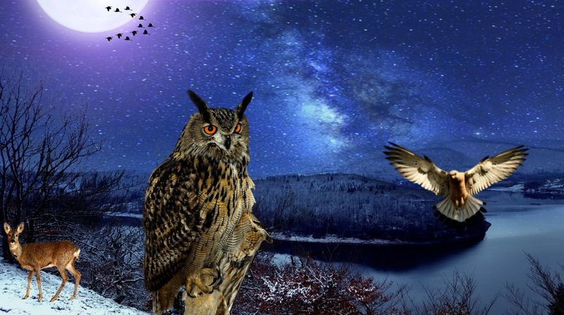 Frosty Fullmoon Night at the Edersee :) Edersee Germany Edersee Sperrmauer Nature On Your Doorstep .Nature. Starts Winter Night Collage Art Star - Space Night Sky Cold Temperature Nature Astronomy Space No People Galaxy Outdoors Winter Snow Owl Flying Animal Themes EyeEmNewHere