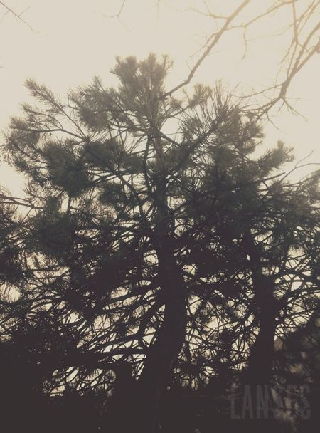Bad Quality Bad Quality But I Don't Care Beauty In Nature Branch Cloudy Sky Day Low Angle View Nature New No People Outdoors Sky Tranquility Tree Trees Trees And Sky