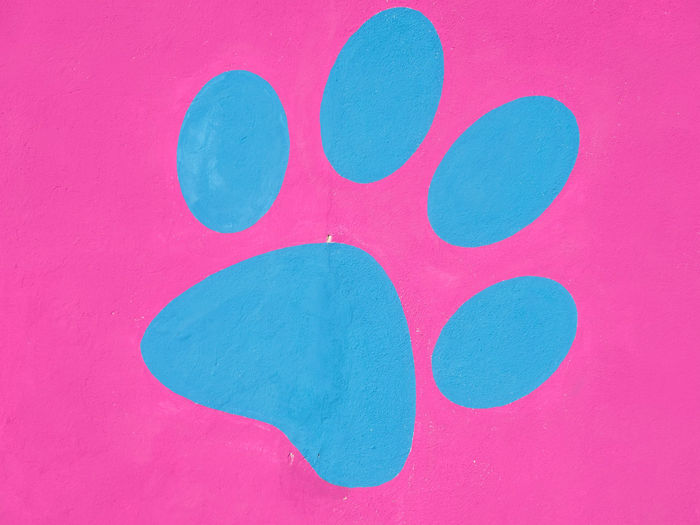 Close-up of green painted on pink background