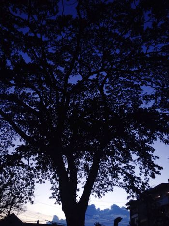 Tree Low Angle View No People Sky Beauty In Nature