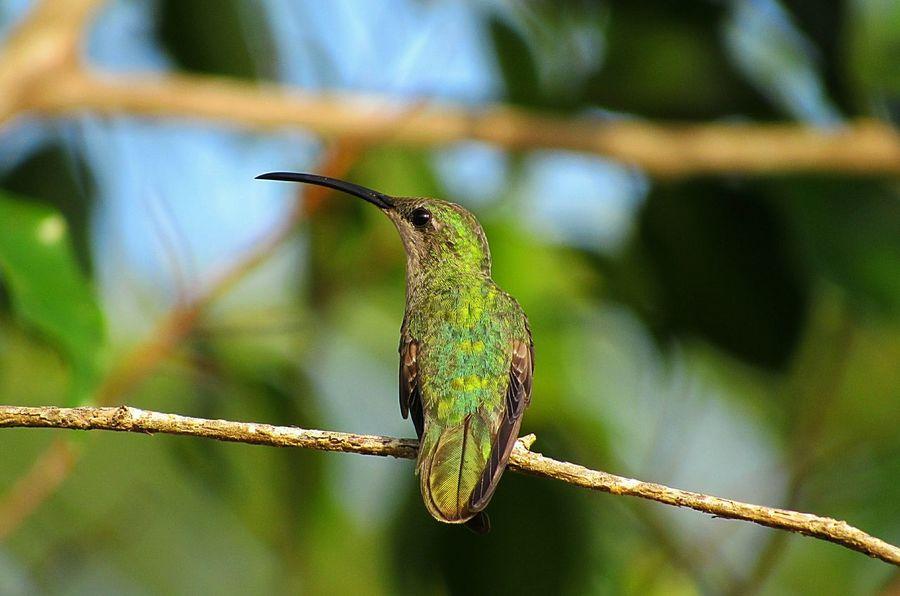 Love Nature !!! Green Color Nature Humingbird