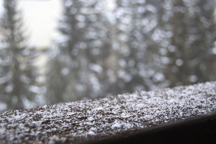 Close-up of frost on wood