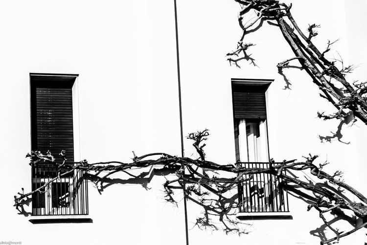 Architecture Building Exterior Built Structure Building No People Low Angle View Nature Plant Tree Day Outdoors Clear Sky Branch Residential District House Window Growth Lighting Equipment Fence