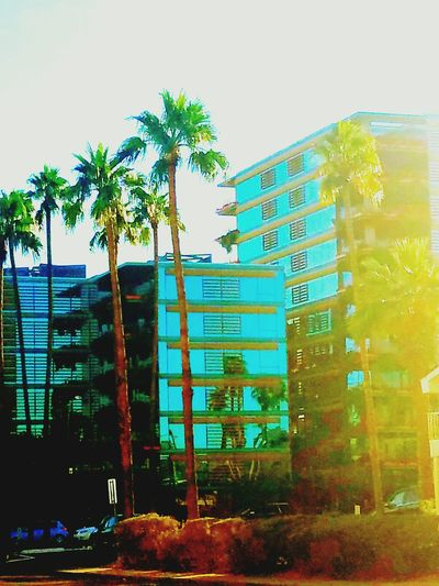 Built Structure Building Exterior Palm Tree Architecture City Phoenixarizona Beautiful ♥ Inspired By Beauty Contrast Colors PhonePhotography Downtown District Beautifully Organized Lines And Patterns Architecturephotography Beautifulbuildings Photos Around You Loving Life! Architecturelovers Palmtreesandsunshine Arizona Sky Women Who Inspire You Hintofblue Focus On Details No People Photos That Will Restore Your Faith In Humanity