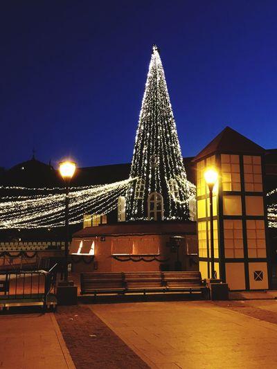 Christmas Decoration Tree Tree Trunk