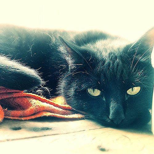 Baby Basho Catlovers Catsoninstagram Cat BLackCat Basho