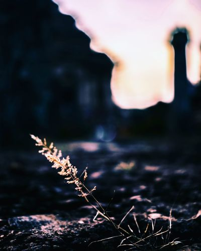 macro Macro Travel India Religion Religious  Sky Heritage UNESCO World Heritage Site Beautiful Wallpaper Photography Photo EyeEm Selects Sunset Sun Sunrise Flower Travel Destinations Peace Leaf Dry Temple Focus On Foreground Close-up Outdoors Nature Landscape