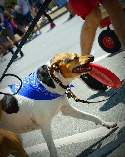 The Street Photographer - 2015 EyeEm Awards Enjoying Life Dogs On Parade The Great Outdoors - 2015 EyeEm Awards Service Animals