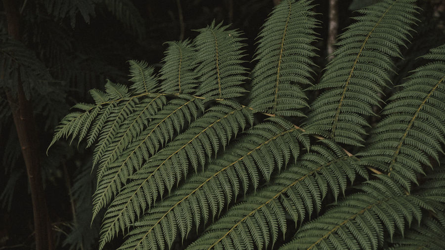 leaf Growth Plant Close-up Green Color Leaf No People Plant Part Beauty In Nature Backgrounds Nature Day Full Frame Tree Fern Outdoors Tranquility Pattern Focus On Foreground Botany Pine Tree Coniferous Tree