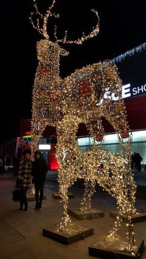 Holiday Season Its Coming,,  Holyday Is Coming 🎉🎉🎉 Illuminated Nightphotography