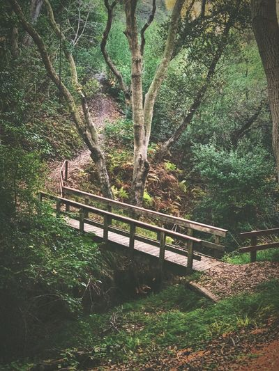 """""""Once Upon A Bridge"""" A secluded glen, in a foothill forest, a path less taken you'll see no tourist. Hidden Places Paths Trails Footbridge Bridge Glen Secluded  Tree Growth Green Color Nature No People Beauty In Nature Outdoors Forest Lush Foliage"""