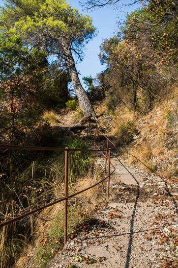 Hiking Path Portofino Natural Regional Park Portofino Promontory Road Trekking Adventure Cliff Day Fence Forest Landscape Liguria Mountains Nature No People Outdoors Scenics Sky Tourism Tranquility Tree Woods