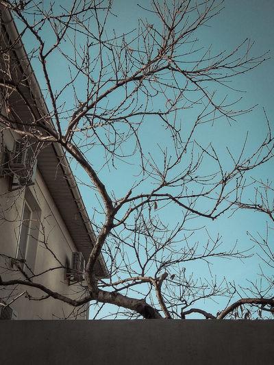 Branch Bare