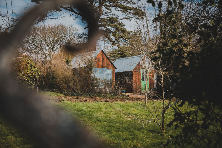 Tree Plant Built Structure Architecture Building Building Exterior House Land No People Focus On Background Nature Grass Day Field Growth Selective Focus Outdoors Tranquility Residential District Forest Cottage