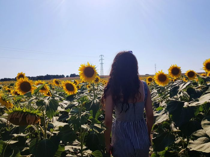 Young Women Flower Clear Sky Women Rural Scene Standing Summer Rear View Human Back Tree Sunflower First Eyeem Photo