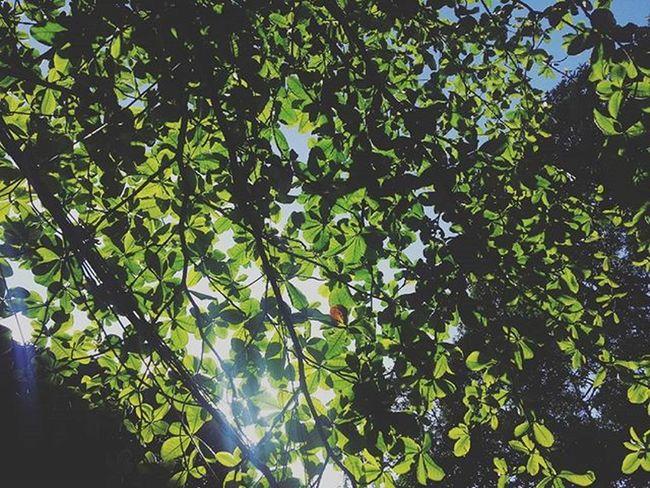Green 👌👍