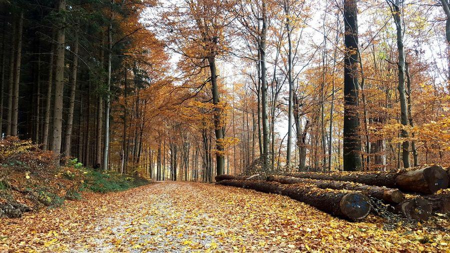 Herbstfarben Herbstspaziergang Blätter So Schön! ♡ Verträumt Farbenspiel Herbst🍁 Nature Natur Luft