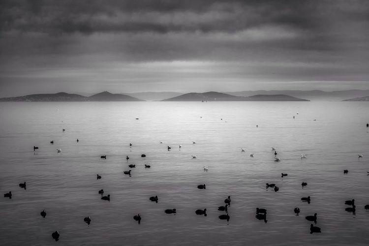 Ducks Floating In Lake