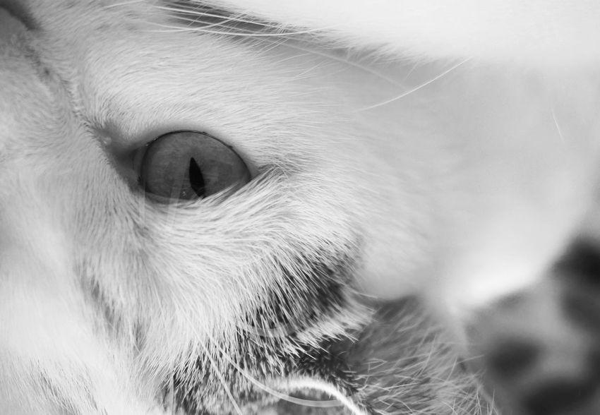 Look into my Eye 👁 🐈 Head Shot  Cat Head Pets Animal Themes Close-up Portrait Looking At Camera Feline Cat Cats Lovers  Cat Portrait Blackandwhite Monochrome Shades Of Grey Black Vs White MnMl Mnmlsm Minimalism Minimal Minimalistic Minimalmood Minimalist Upside Down
