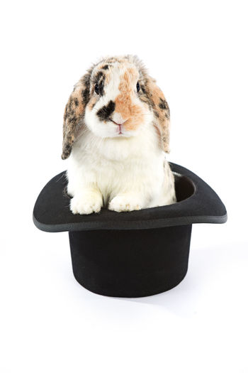 Image series with a rabbit and some with easter eggs. Hat Bunny  Magic Hat No People Rabbit Top Hat White Background
