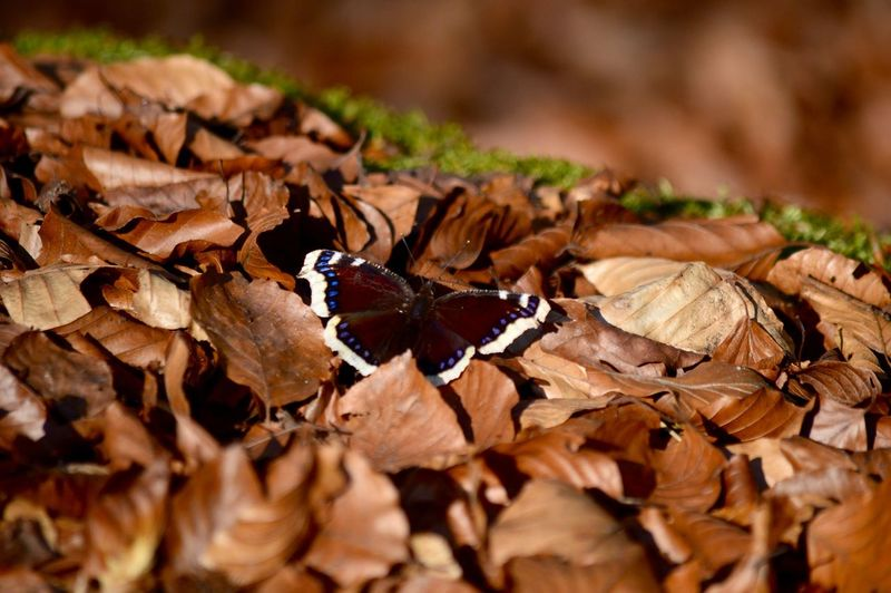 Autumn Butterfly Fallen Ground Leaves Natural Pattern Nature Outdoors Season  First Eyeem Photo