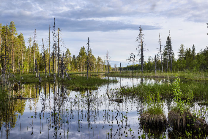 Reflection Lake Water Cloud - Sky Tree Outdoors Nature Wilderness Area Sweden Planet Earth Nature River Forest View Landscape Tree Forest Photography Adventure Beauty In Nature Forest Scenics WoodLand Lakesideview Getting Away From It All