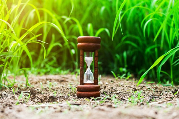 Land Selective Focus Time Grass No People Nature Sand Hourglass Plant Outdoors Green Color Single Object Instrument Of Measurement Close-up Field Glass - Material Day Transparent Education Deadline Small
