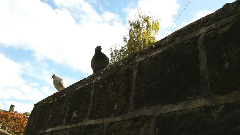 Silly pigeons... Wall Lookingup Diagonal Town POV Autumn Autumn Leaves Tree Landscape Learn & Shoot: Leading Lines