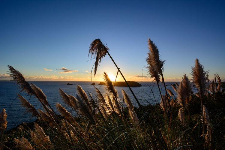 Sunrise at the eastern Coromandel coast in New Zealand. Beauty In Nature Coromandel Golden Hour Horizon Over Water Landscape Landscapes Nature New Zealand No People North Island New Zealand Outdoors Scenics Sea Sky Sunrise Vacations Water