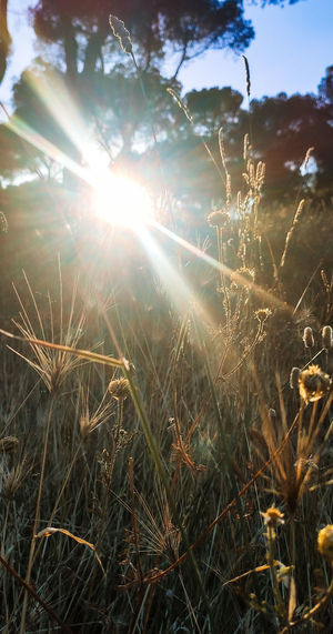 Sunlight streaming through plants on field during sunny day