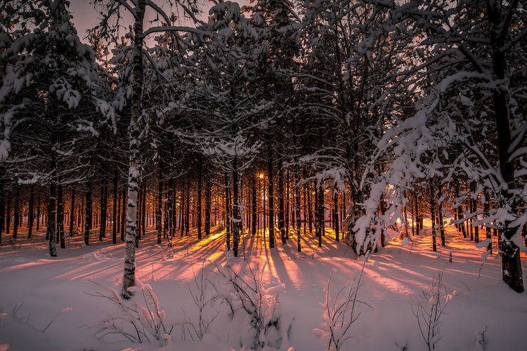 Light of sunset Tree Snow Cold Temperature Winter Nature Beauty In Nature Covering Forest Tranquility No People Tranquil Scene White Color Frozen Outdoors WoodLand Treelined Sunlight Sunset Light And Shadow Landscape Freshness Scenics Sun Orange Color Day
