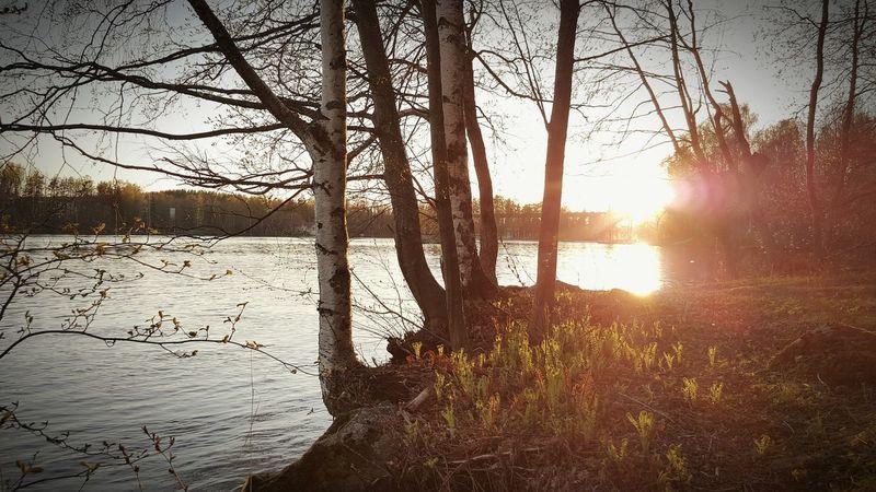 Sunset Spring Springtime Trees Riverside Heinola