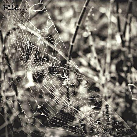 Spider Nature EyeEm Nature Lover Spider's Web Monocrome Walk