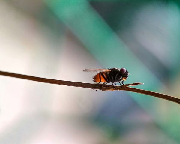 Flies on twig Marco Photography Marco Marco Beauty Anime Eye Animal Wing Animals Animal Fotography Fliesonleaf Flies Flies At Twig Twig Perching Insect Full Length Animal Themes Close-up Sky Housefly Fly Animal Antenna