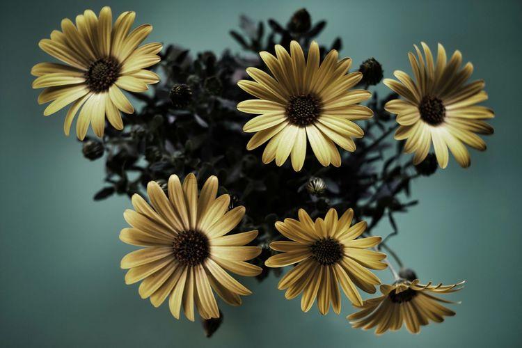 Close-up of fresh yellow black-eyed susan flowers