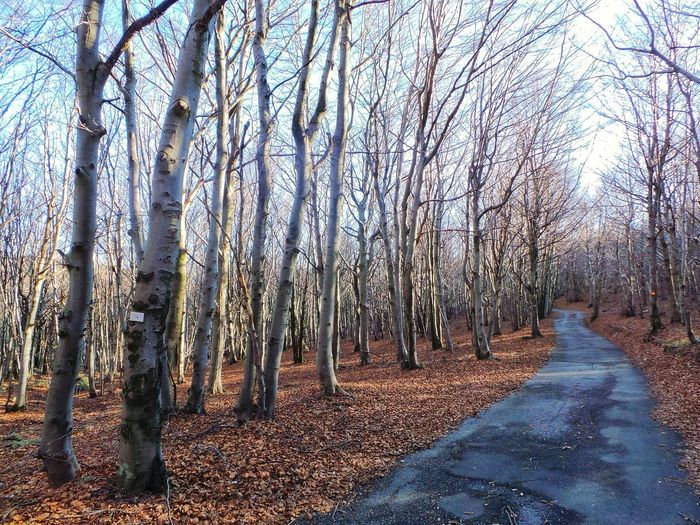Endlessness EyeEm Best Shots A Walk In The Woods Tree_collection