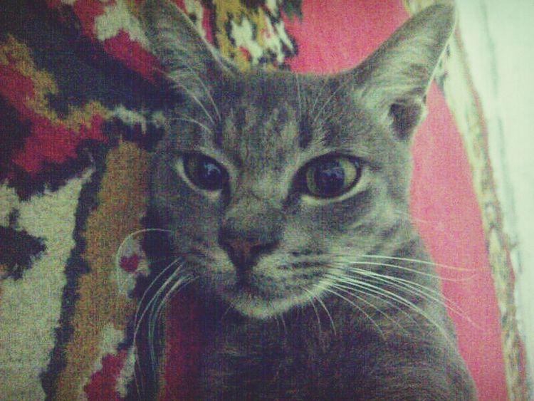 Missing Him <3 lot of love dobokkkk♥♥♥