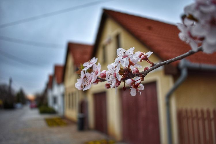 Spring Spring Springtime Flower Sunset Houses House Street Streetphotography Way Pink Color