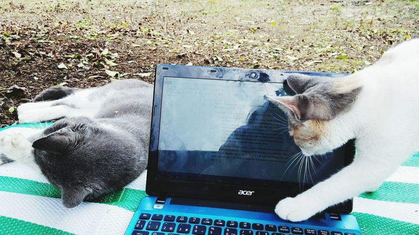 Miau miau :3