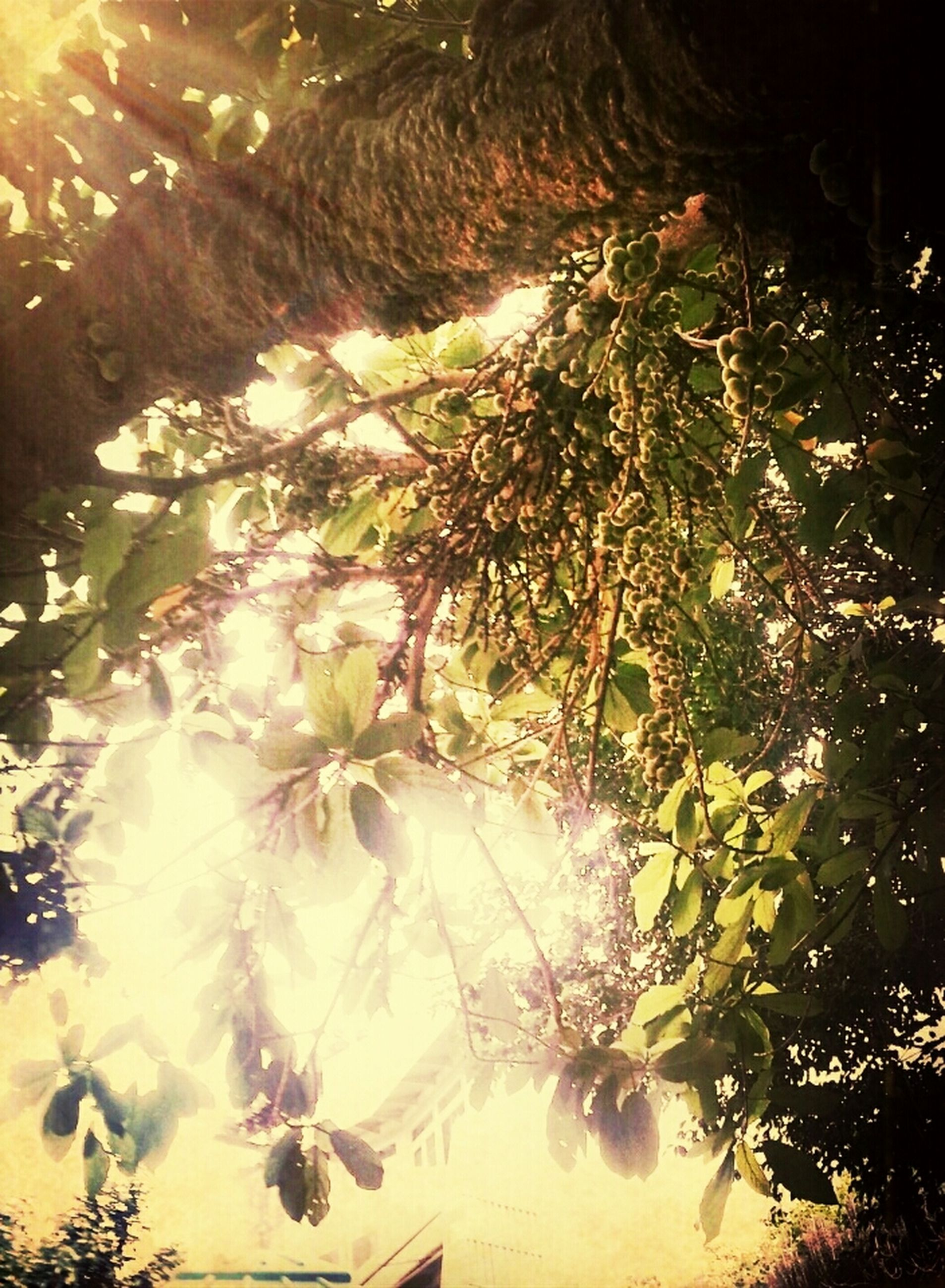 tree, growth, sunlight, nature, branch, beauty in nature, plant, sunbeam, low angle view, tranquility, no people, night, outdoors, lens flare, leaf, flower, freshness, illuminated, shadow