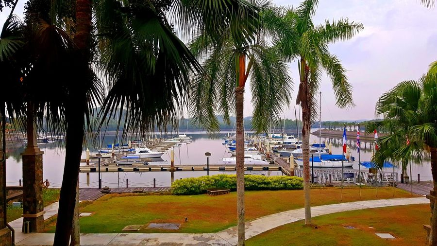 Sabana Cove Marina Club, Johor, Malaysia Mode Of Transportation Scenery Scenics Leisure Boat Boats Marina Club Nature Palm Tree Tropical Climate Nautical Vessel Coconut Palm Tree Tourist Resort Beauty In Nature