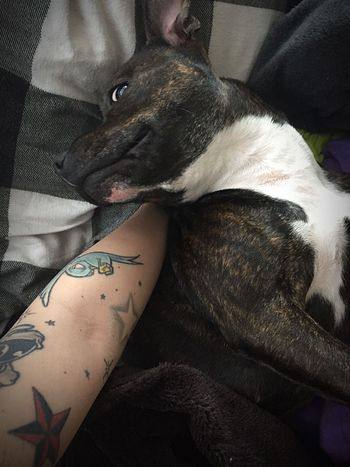 True love and happiness 💜 Lookatthatface Staffysmile Mydogiscoolerthanyourkids Lovemydog Cute Pets Staffordshire Bull Terrier Cutenessoverload Staffylove Can't Live Without Mylittleprincess
