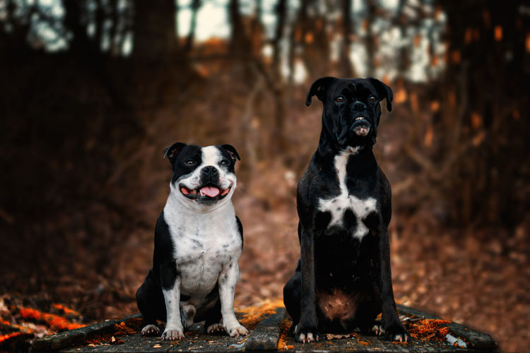Close-Up Portrait Of Dogs Sitting In Forest