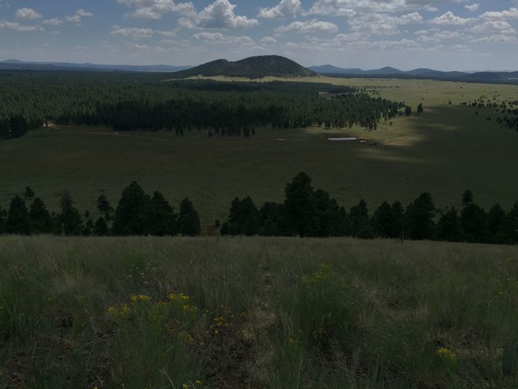 Flagstaff Arizona trip. Flagstaff Gardens Flagstaff Mountain Flagstaff, Az Flagstaffarizona Flagstaffbluesnbrews Grass Green Landscape_Collection Landscape_photography My Favorite Photo My Favorite Place