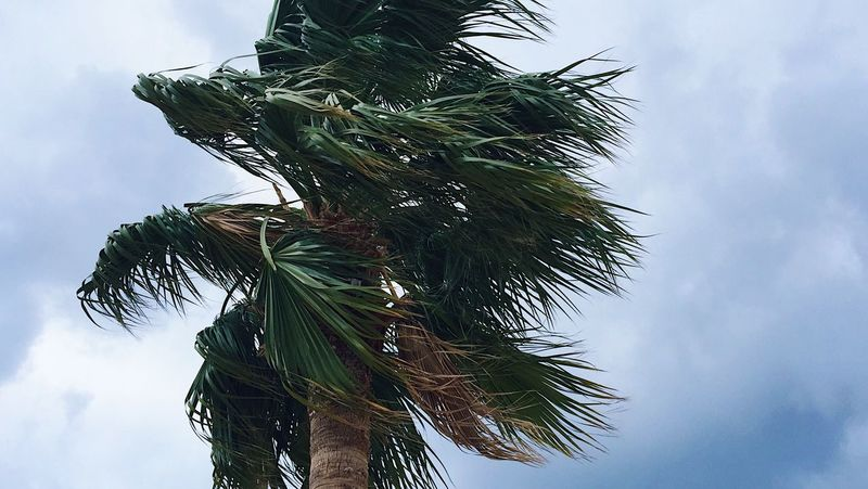 A palm and windy weather Beautiful Blog Day Green Holiday Marmaris Nature Nature Nature_collection No People Palm Palm Tree Palm Tree Palms Sky Spring Tourism Tourist Travel Travel Blog Travel Destinations Tree Tree Turkey Vacation