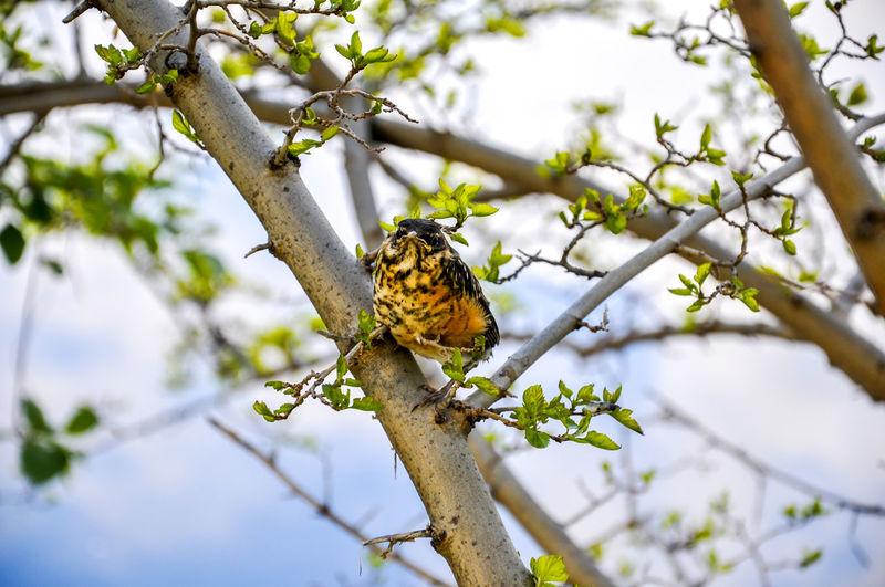 Portrait of bird perching on tree